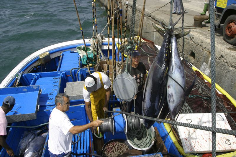 Resultado de imagen de pesca de atun canarias